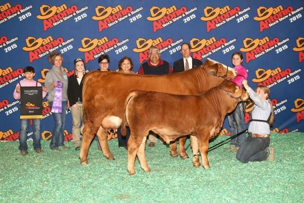 Sire LMCMM Dr Red Duke at side of his major champion dam LMC MM Red Velvet that won SA and the $10,000 SALE Scholarship for Mia