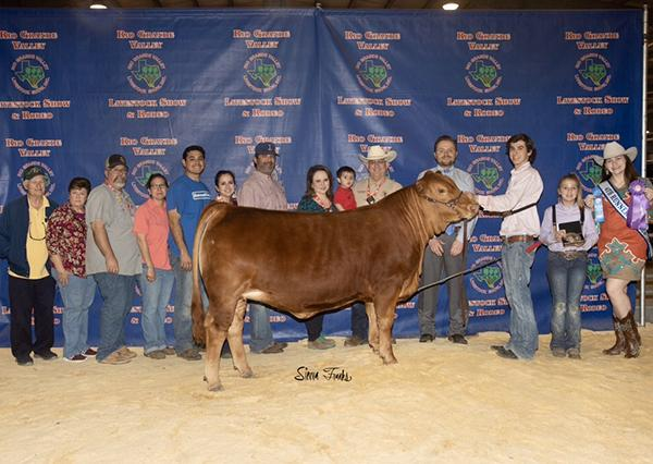 Many times champion paternal sister being shown by Tyler Denny that was purchased in a LMC GenePLUS Online Sale