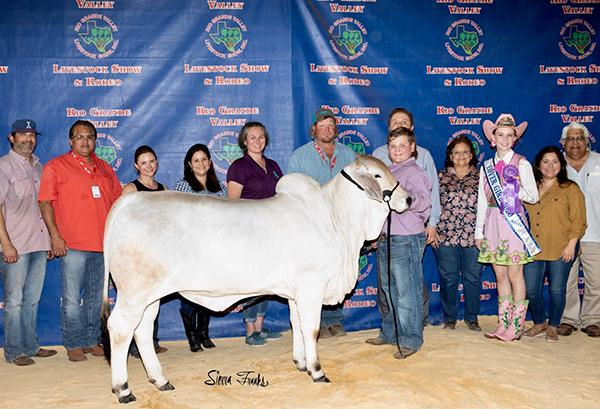Champion daughter shown by Mackie Simpson. Dam is a GenePLUS Sale topper owned by Stephen Folse.